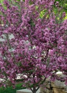 Flowering Fruit – Version 2