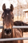 horse-419235_960_720