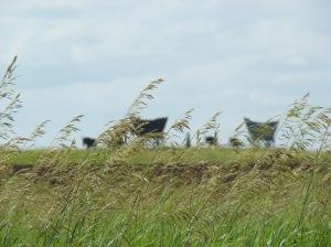 Prairie.Schooner