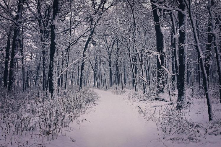 tlt-woods