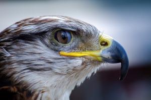 tlt-falcon