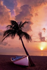 tlt-hawaii-sunset-palm